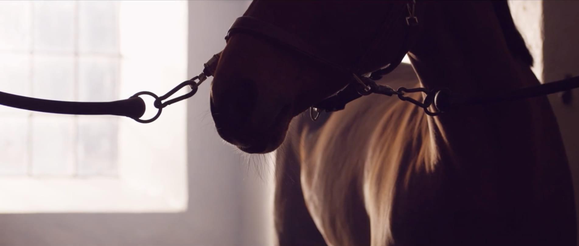 krafft, häst